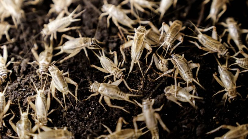 This Giant Automated Cricket Farm Is Designed To Make Bugs A Mainstream Source Of Protein